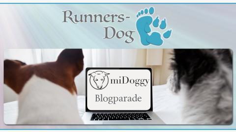 "miDoggy Parade ""Autofahren mit Hund – So klappt's"""