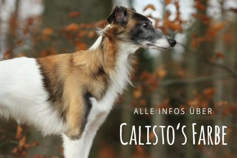 Calisto's außergewöhnliche Fellfarbe: Watermarking