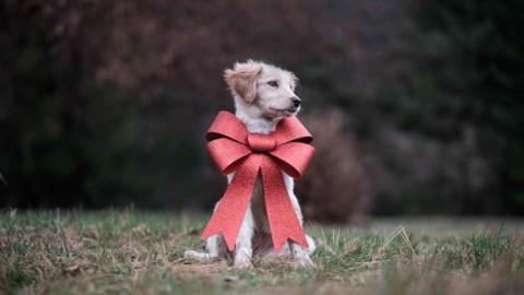 Ein Welpe zieht ein – Straßenhund Brösel