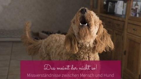 Das meint der nicht so – Missverständnisse zwischen Mensch und Hund