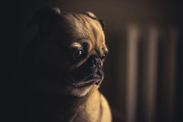 Massage bei Hunden