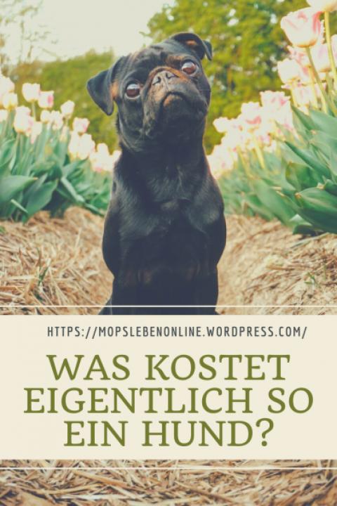 [Hundealltag] Was kostet eigentlich so einen Hund?
