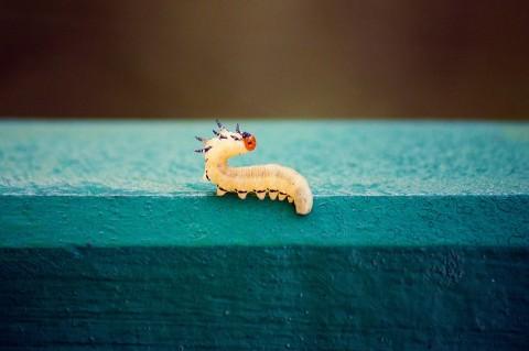 5 natürliche Mittel gegen Würmer: vorbeugen und bekämpfen