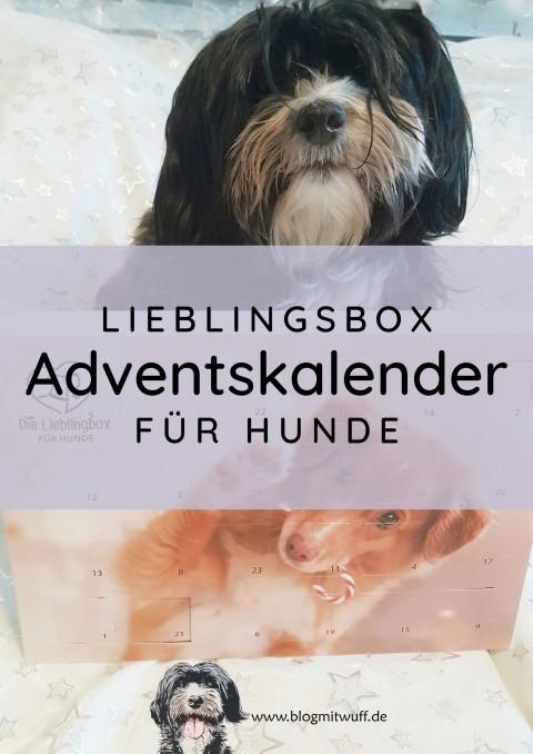 Werbung | Adventskalender für Hunde