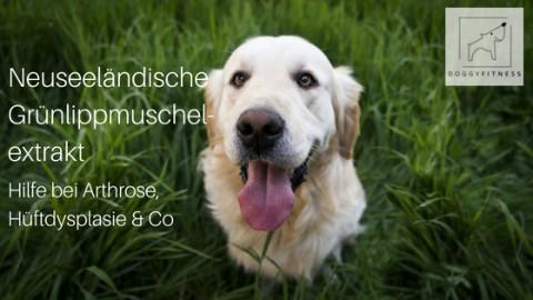 Nahrungsergänzungsmittel – Neuseeländisches Grünlippmuschelextrakt – Hilfe bei Arthrose, Hüftdysplasie & Co.