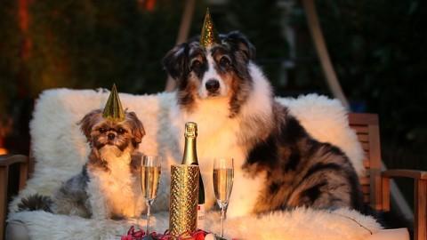 Tipps gegen Silvesterangst bei Hunden