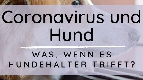 Coronavirus und Hund – Was, wenn es Hundehalter trifft?