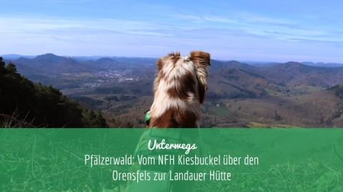|unterwegs| Pfälzerwald: Vom NFH Kiesbuckel über den Orensfels zur Landauer Hütte
