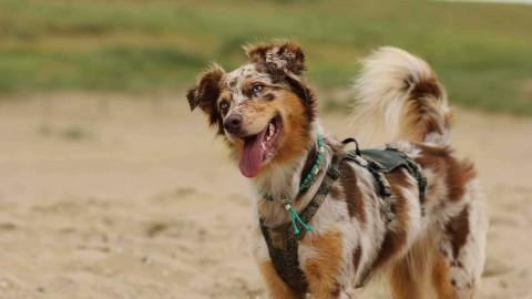 |unterwegs| Urlaub mit Hund im holländischen Noordwijk