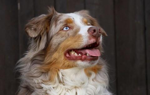 Häufige Erbkrankheiten bei Hunden