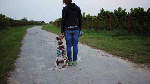 |test| Orbiloc Dog Dual – und es wurde Licht