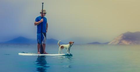 Fit durch den Sommer mit Hund