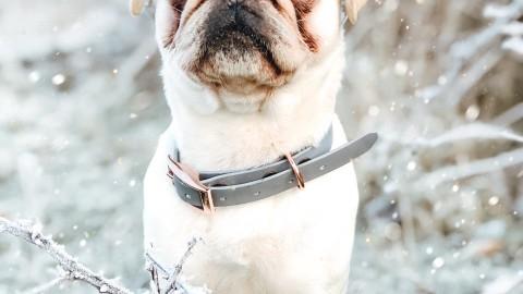 [Hundealltag] Versicherungen für den Hund