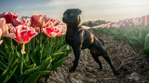 [Hundealltag] All Eyes on Me – Gewinne die Aufmerksamkeit deines Hundes