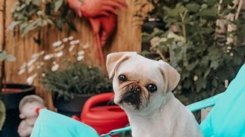 [Gesundheit] Läufigkeit beim Hund