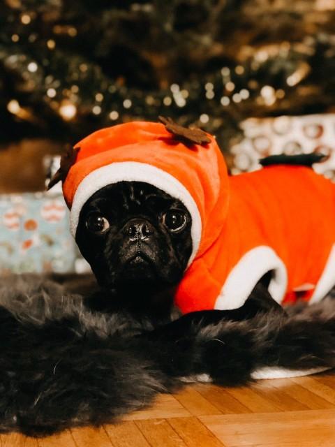 [Hundealltag] Ein Hund zu Weihnachten!