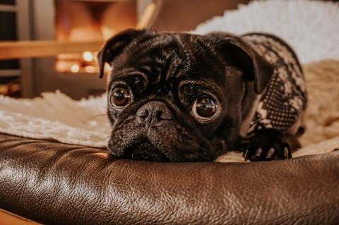 [Hundealltag] Hund allein zuhause – So klappt's!