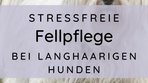 Stressfreie Fellpflege bei langhaarigen Hunden