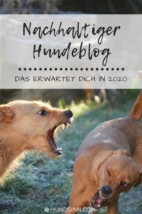 Quo vadis, HundSinn? – Unsere Ziele und Pläne für 2020