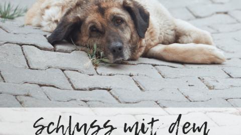 Schluss mit dem Religionskrieg ums Hundefutter!