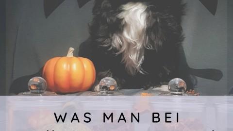Was man bei Halloween mit Hund beachten sollte