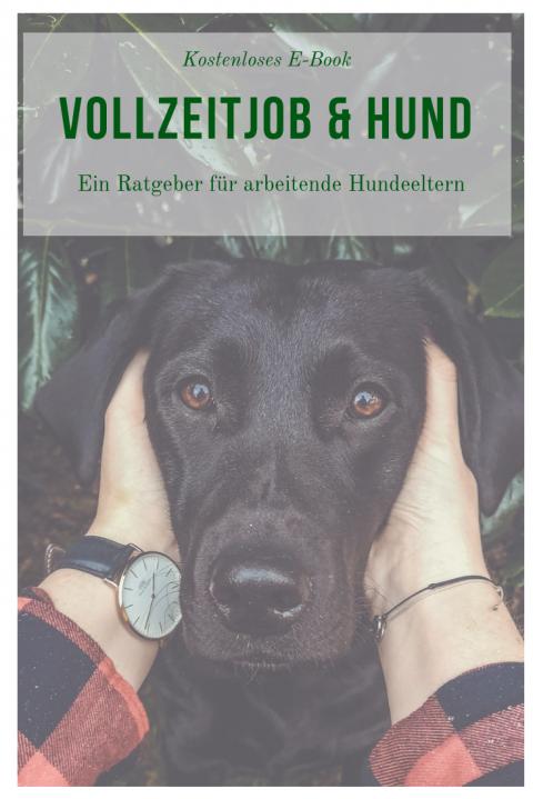 Vollzeitjob & Hund – Der Ratgeber für arbeitende Hundeeltern
