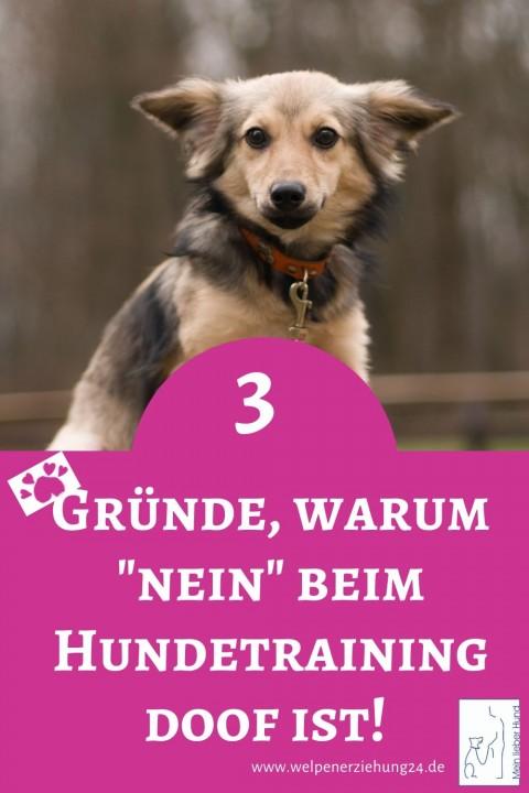 """3 Gründe, warum """"nein"""" beim Hundetraining doof ist"""