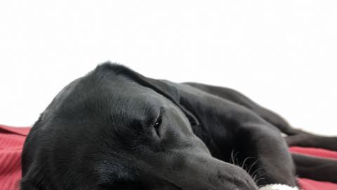 Die perfekte Hausapotheke für den Hund