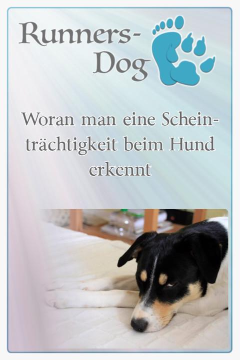 Woran man eine Scheinträchtigkeit beim Hund erkennt