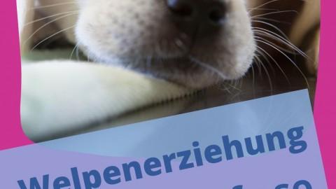 Hundeerziehung mit Nebenwirkungen