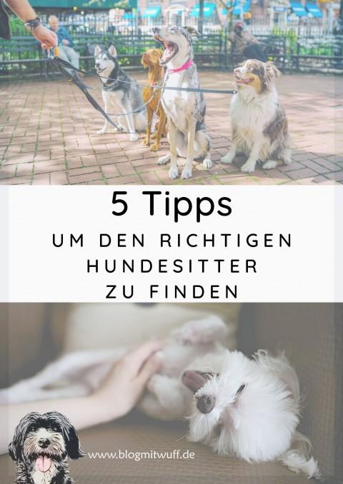 5 Tipps um den richtigen Hundesitter zu finden