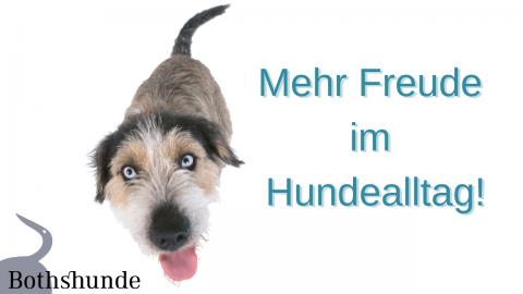 Mehr Freude im Hundealltag