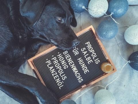 Propolissalbe für Frauchen und Hund