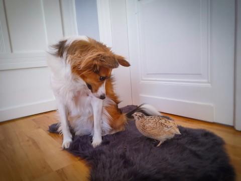 Wachteln – Therapietiere für Kaya
