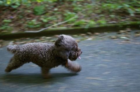 Joggen mit Hund – das solltest du wissen