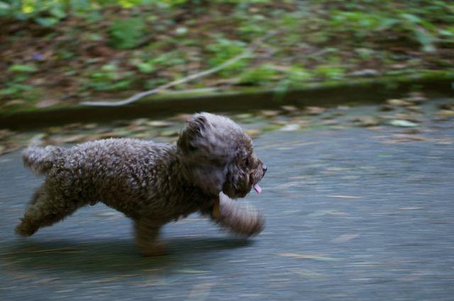 Joggen mit Hund Tipps