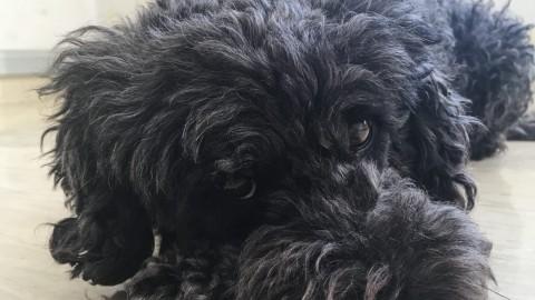 Hund im Büro: Wie Niko unser Teaming verändert hat