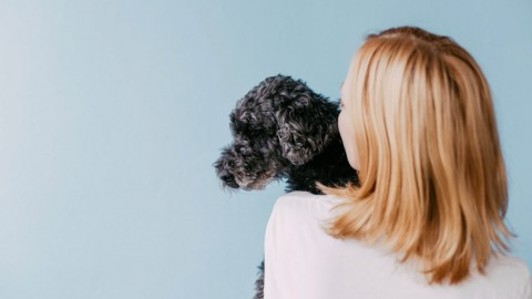 Steuern sparen mit Hund