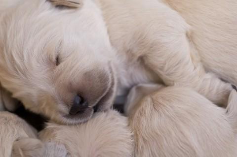 Die Entwicklung vom Welpen zum erwachsenen Hund