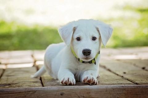 12 Regeln für die Hundeerziehung