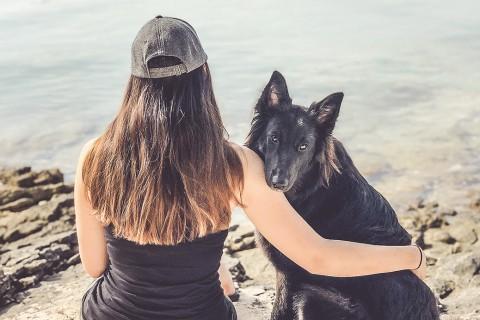 Hund in der Pubertät: Der Überlebensguide
