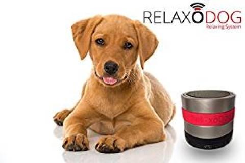 Eine Liebeserklärung an RelaxoDog