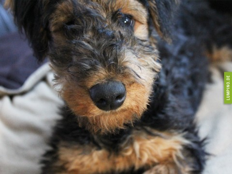 Tierschutz oder Züchter? Teil 2 – Ronja vom Züchter