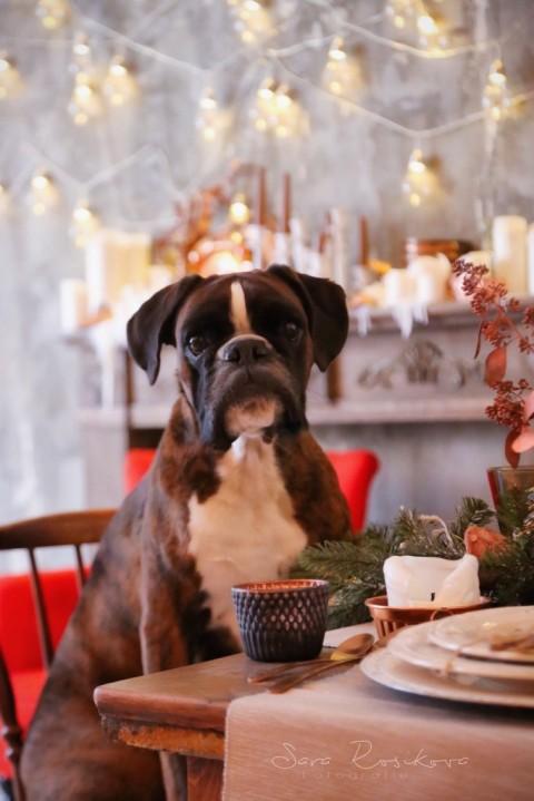 Elsa bittet zu Tisch – Der große FRESCO Test