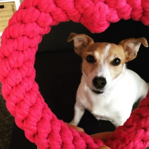 Die besten, nachhaltigen Öko-Spielzeuge für unsere Hunde