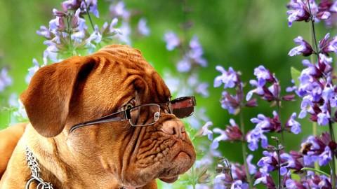 Tierische Kräuterküche – Salbei für Hunde