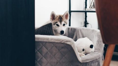 Meine 9 Tipps für einen sauberen Haushalt mit Hund!