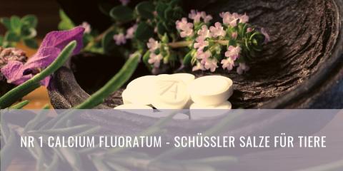 Schüssler Salze für Tiere | Calcium Fluoratum