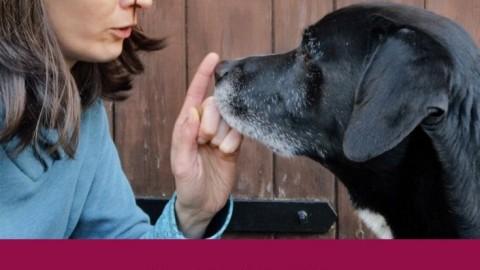 Wenn Hundetrainer schlechte Tipps geben