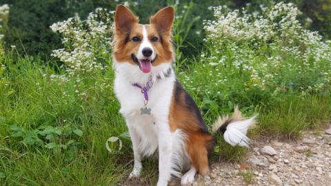 [miDoggy Parade] Hundeliebe – so kam Kaya zu uns